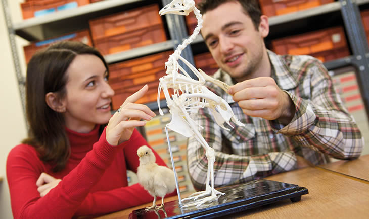 Two students examining a bird skeleton in and archaeology lab